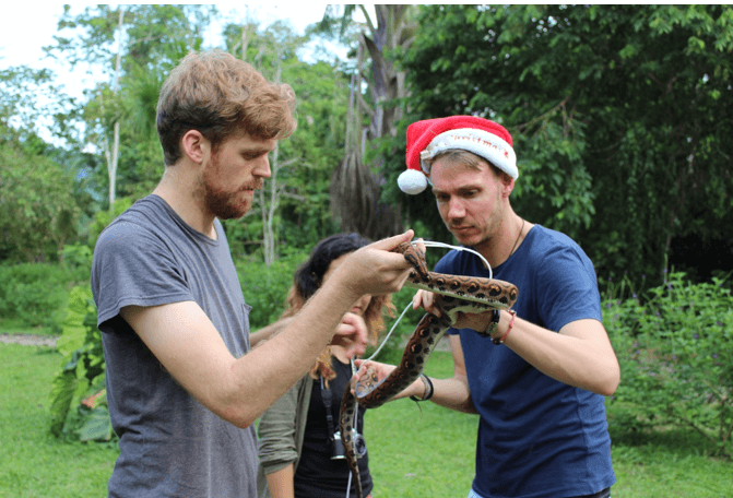 Chris Beirne and Mark Thomas measuring a Peruvian rainbow boa on Christmas day. Credit: Kristi Foster.