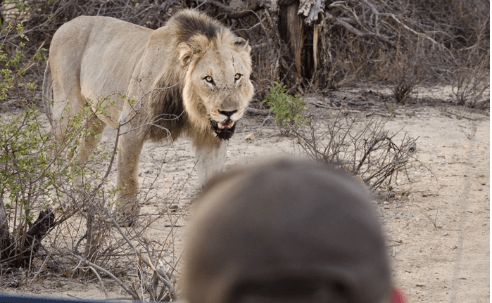Close encounters with African Wildlife