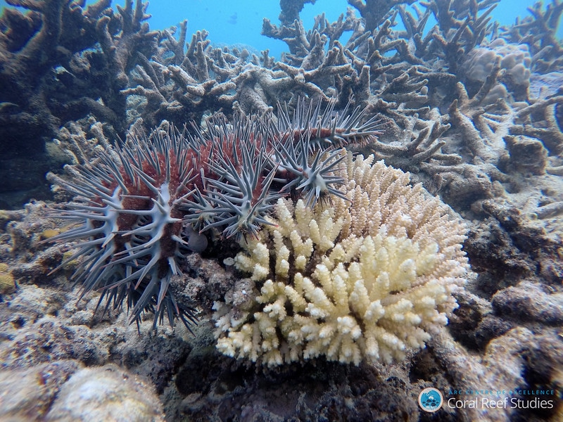 Marine-conservation-jobs-combat-threats-like-coral-bleaching